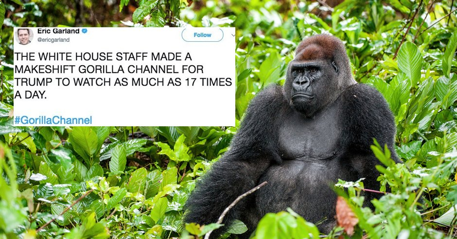 Hey It's The Gorilla Channel